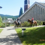 DBH-Pferde_035