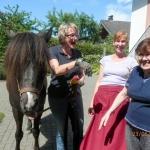 DBH-Pferde_089