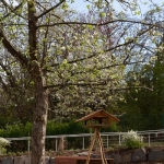 Unser Garten im Dietrich-Bonhoeffer-Haus